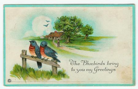 Bluebirds postcard by Stecher (623 D) - obverse